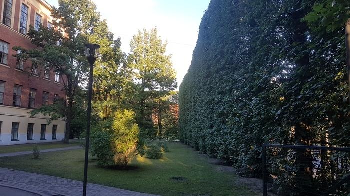 Живая ограда вокруг школы. Красота!