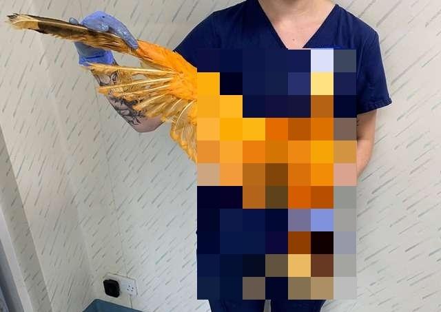 Что это за оранжевая птица?