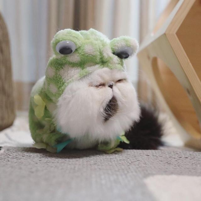 """Очаровательный кот в """"галстуке"""""""