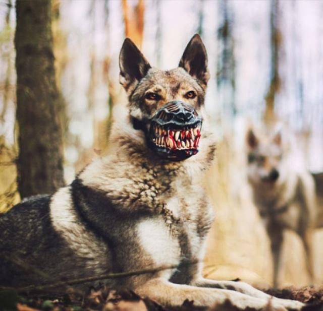 """""""Не бойтесь, собака не кусается"""""""