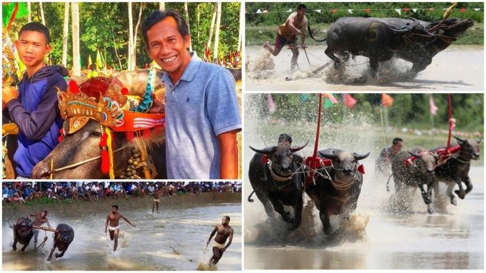 Ежегодные гонки на буйволах в Таиланде