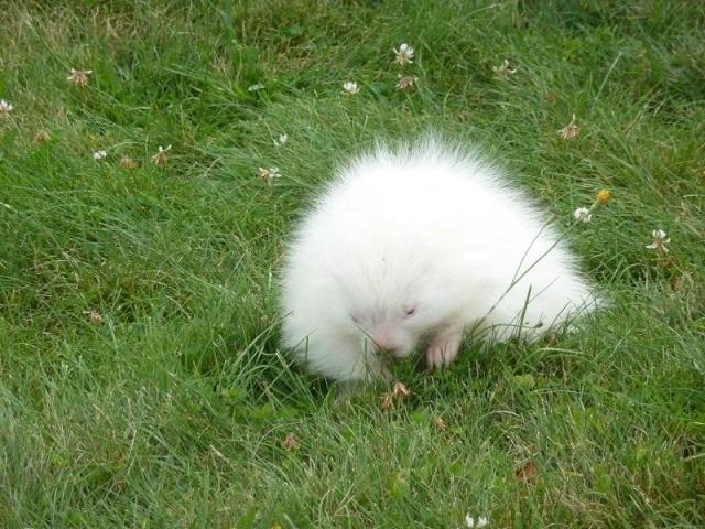 Белоснежная красота подборка удивительных животных-альбиносов