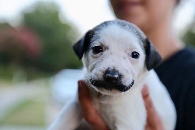 Сальвадор Долли - щенок, который кого-то очень напоминает