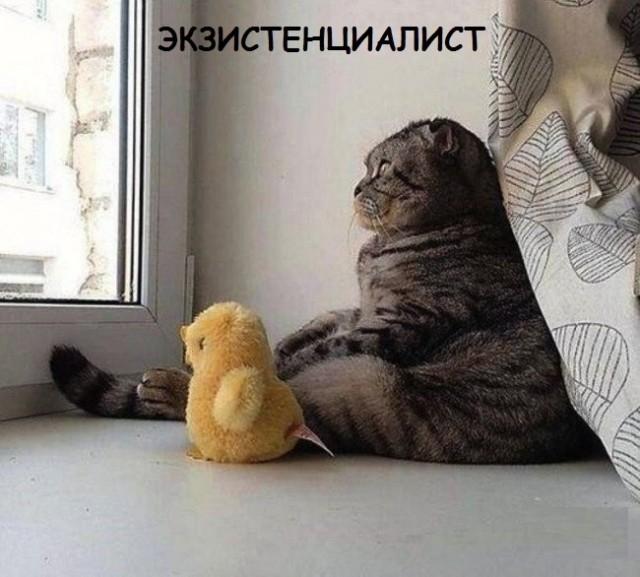Такие разные и забавные котики