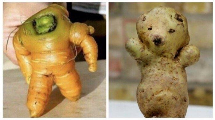 """Смешные фотографии """"оживших"""" овощей и фруктов"""