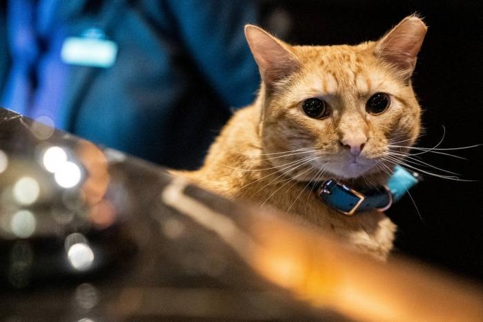 Модный показ среди кошек в Нью-Йорке