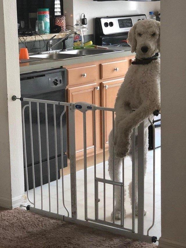Фотожабы на брутального пса Хенни