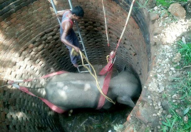 Слон угодил в колодец, и ему на помощь пришли военные
