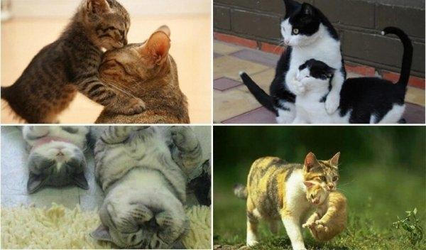 Мамы-кошки