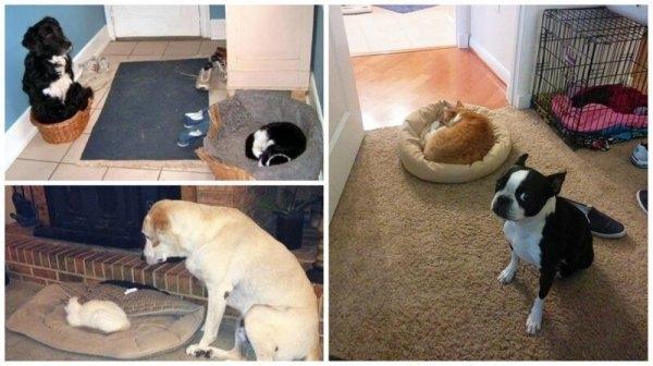 Как выглядит игра в царя горы между собаками и кошками
