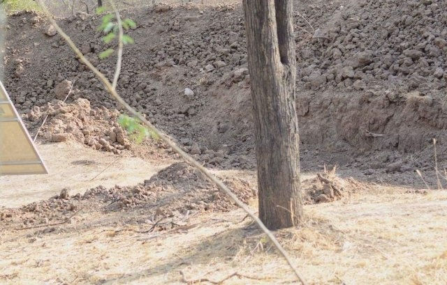 Проверка наблюдательности: найдите леопарда на фото