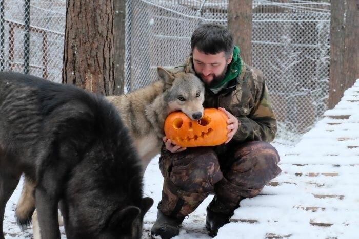 Бизнесмен, приручивший волков, набирает популярность в «Инстаграме»