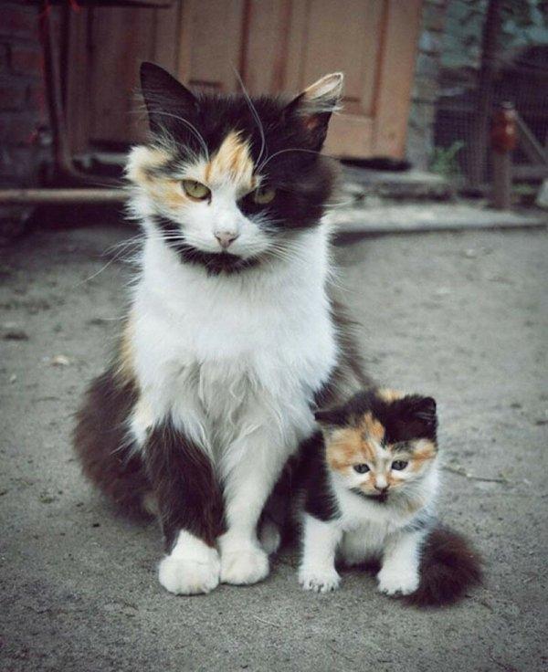 Фотографии из семейных альбомов котов