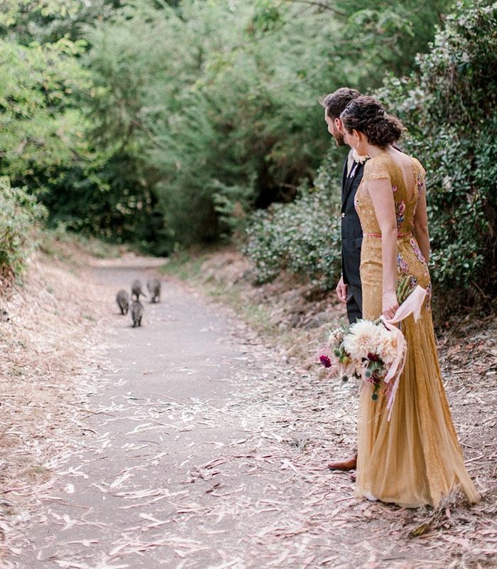 Банда енотов ворвалась на свадебную фотосессию и сделала ее лучше