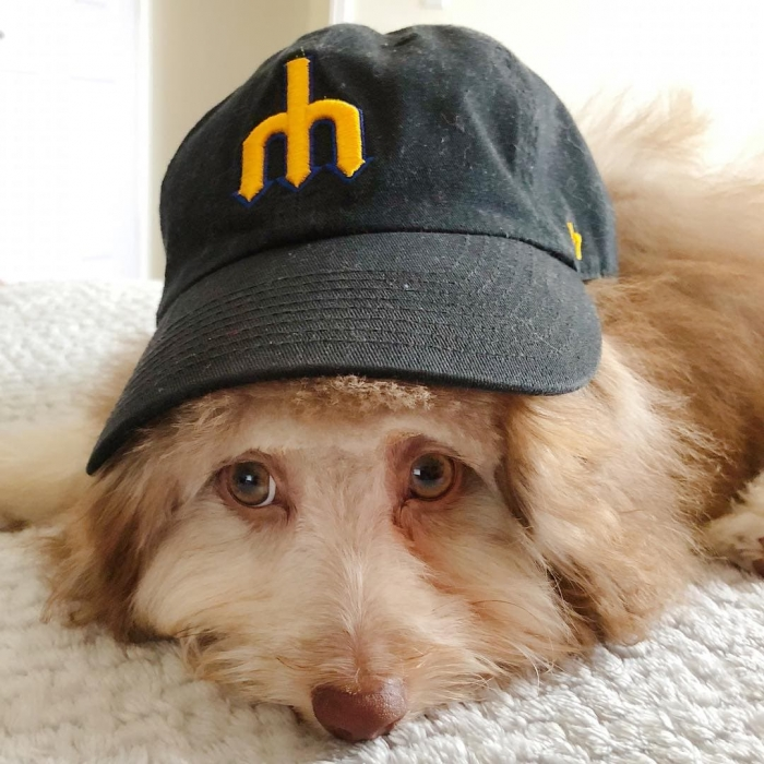 Нори - пес с абсолютно человеческой мордой