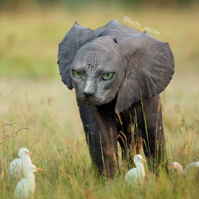 """Котов """"скрестили"""" с другими животными"""