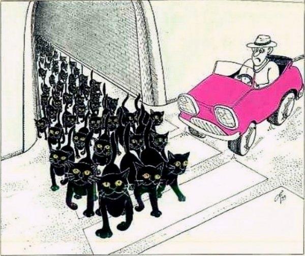 Мыши и коты