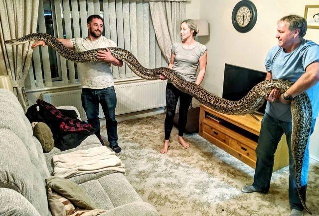 Семья с 2 детьми живет с питоном длиной 5,5 метров