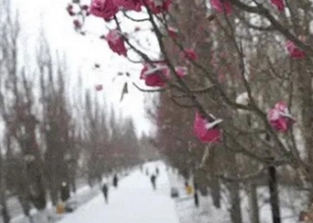 В Омске выпал снег, но тополя до сих пор «цветут»