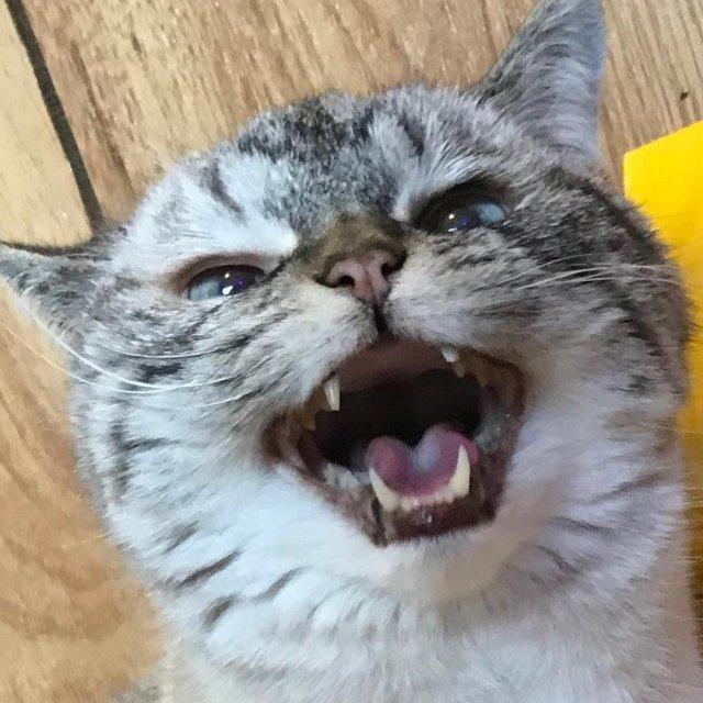 Локи - очаровательный и немного зловещий кот-вампир