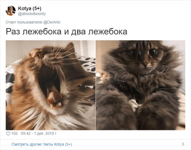 Пользователей Twitter попросили показать, чем занимаются их животные