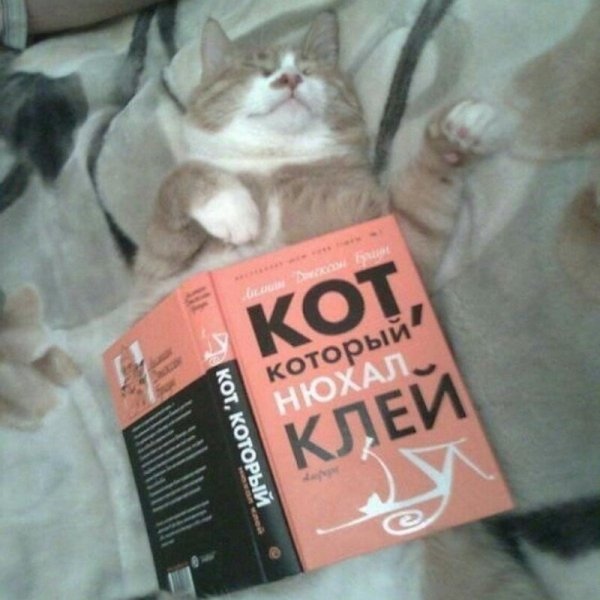 Кис-кис- юмор