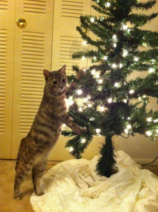 Как обезопасить елку от кота - лайфхак