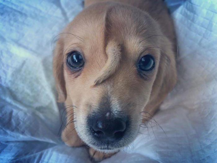 В приют привезли щенка-единорога - с хвостом на лбу