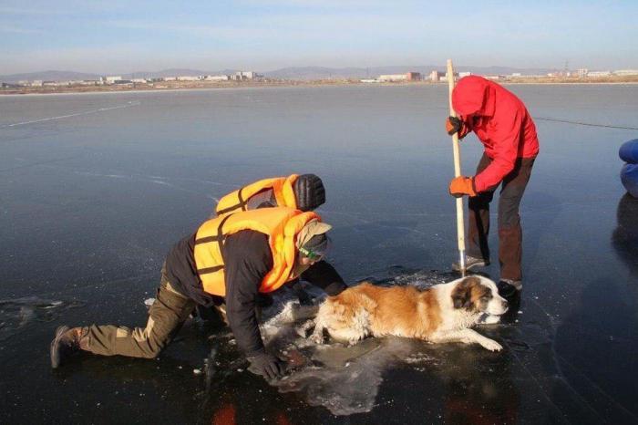 Собака вмерзла в лед в Чите