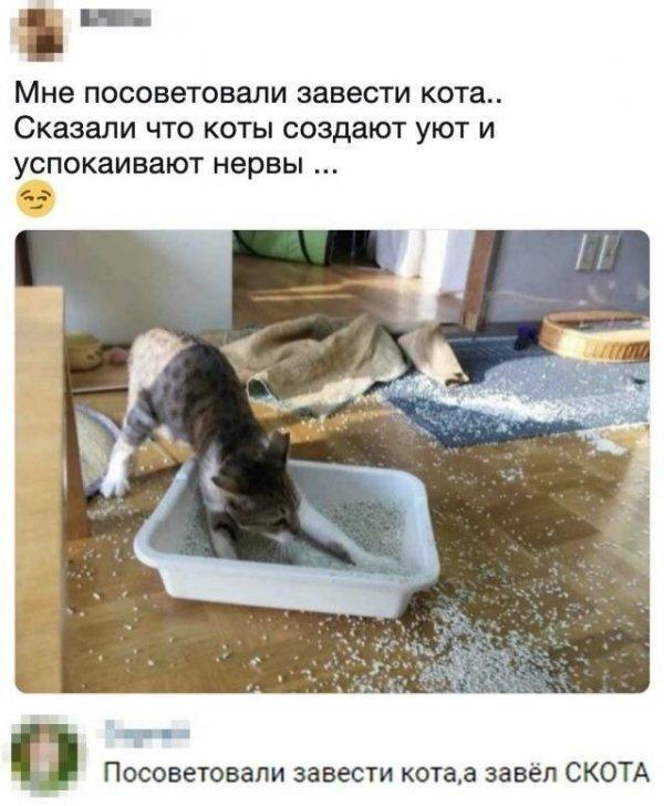 Котовсячина