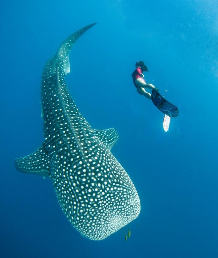 Невероятные кадры фридайвер плавает с огромными китами