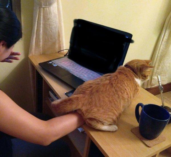 Коты-наглецы