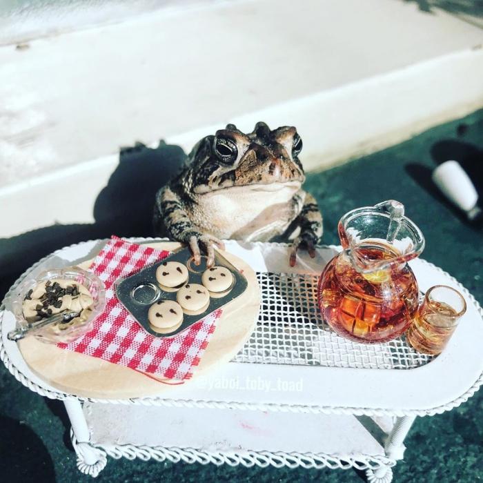 Почти человеческая жизнь одной жабы