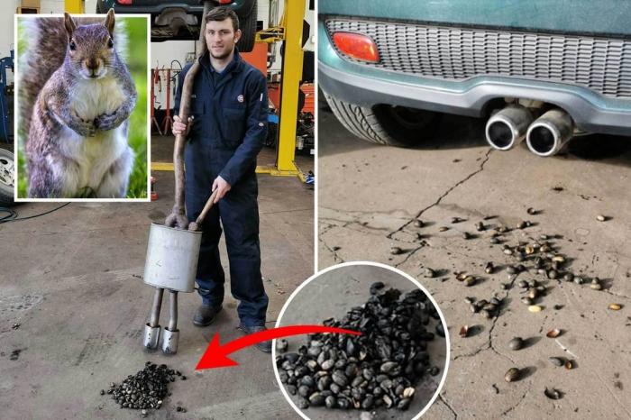 Белка спрятала сотни орехов в выхлопной трубе автомобиля