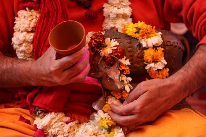 Сотни индусов выпили коровьей мочи для профилактики коронавируса