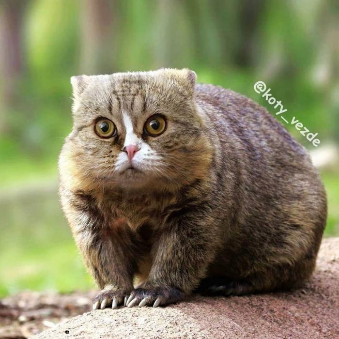 Кошачья вселенная