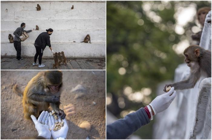 Голодные обезьяны в Катманду