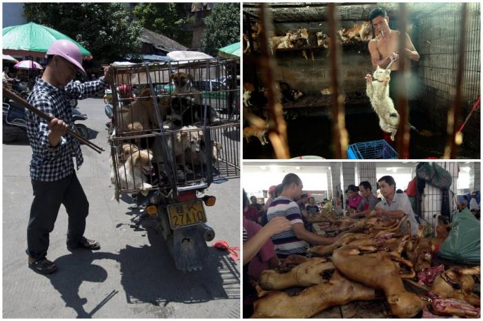 В китайском городе Шэньчжэнь запретили продавать мясо кошек и собак