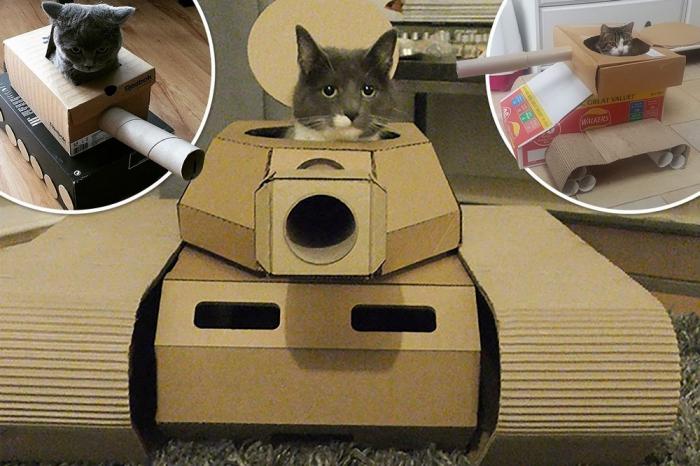 Боевые коты захватывают дома своих хозяев в картонных танках