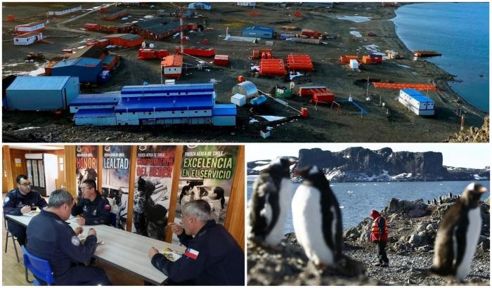Антарктида — единственное место, где нет коронавируса