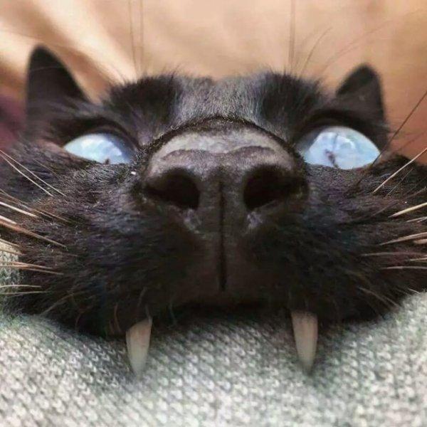 Очень кошачья подборка