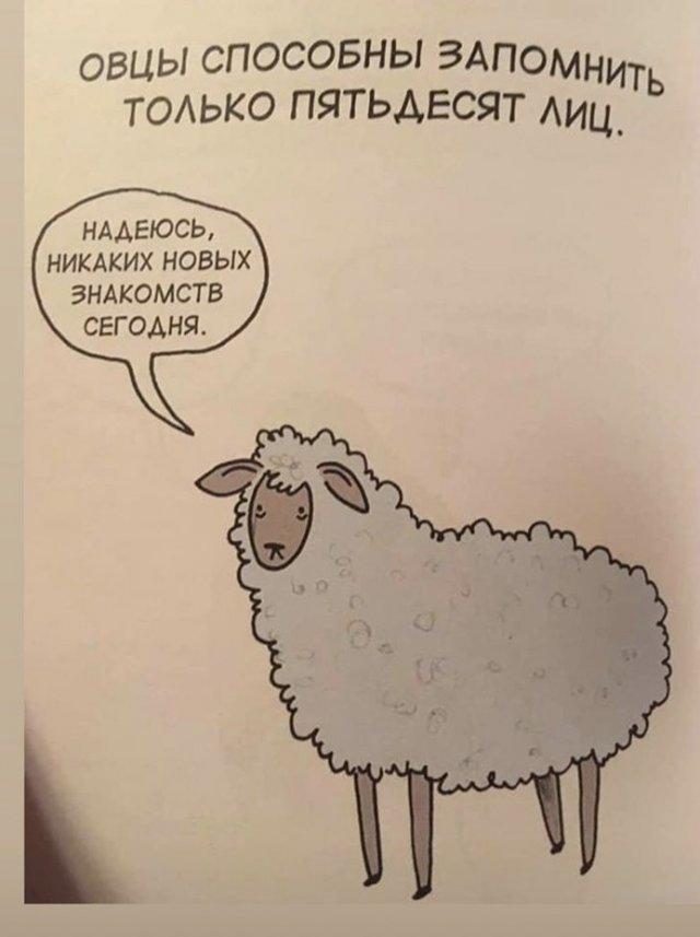 Грустные факты о животных, от которых становится смешно