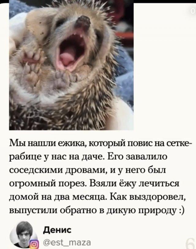 Доброты пост: как пользователи помогли животным в беде