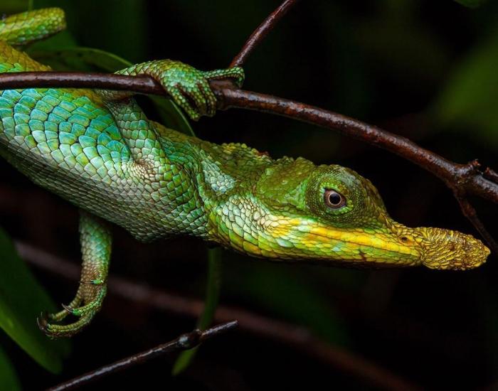 Удивительные существа на снимках Фрэнка Дешандола