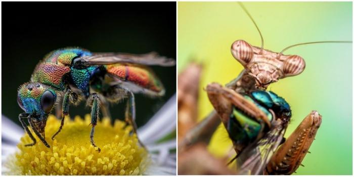Макроснимки насекомых Флориана Дзула