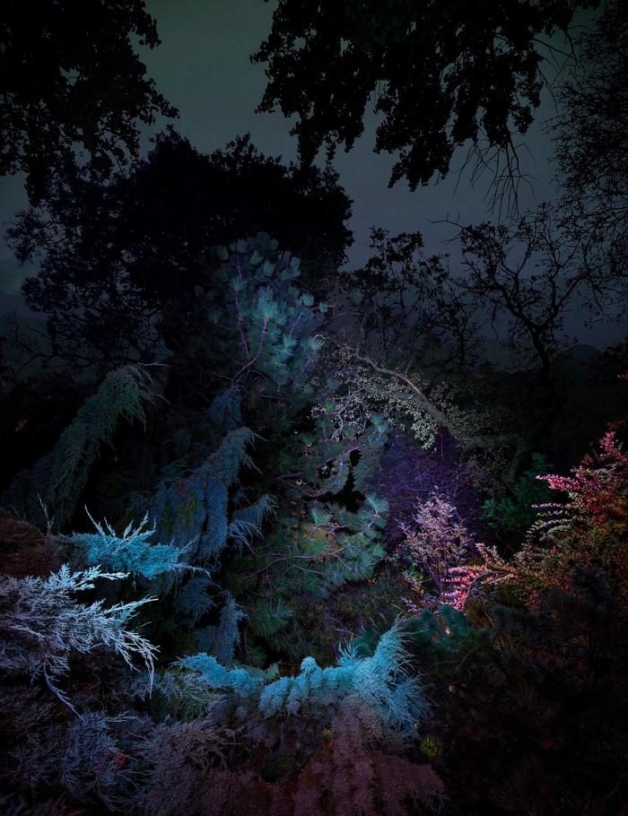 «Астроботанические» снимки Линды Вестин