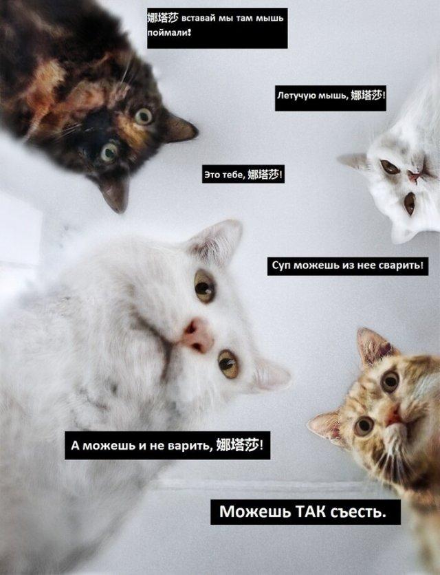 Мемы про коронавирус и вторую волну пандемии