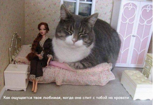 Женщины - они как кошки