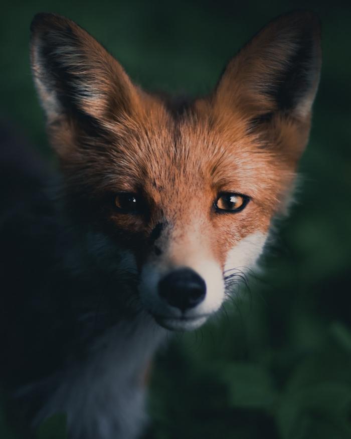 Замечательные портреты диких животных Конста Пункка