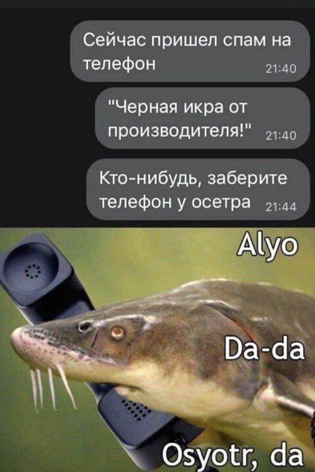 Шутки и мемы из Сети